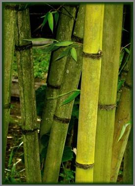 Candi-2-Bambu