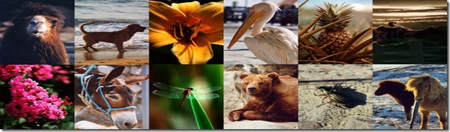 Flora-fauna