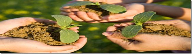 plants cooperation