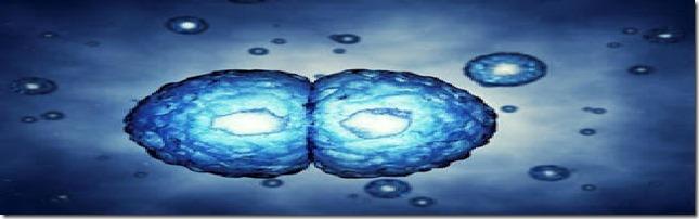mitosis1