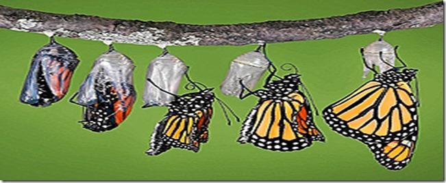 capullo-mariposa-proceso