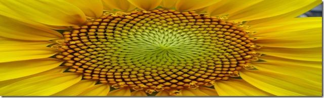 geometría-sagrada-1024x768