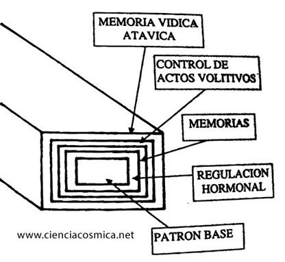 patron-conductual-3