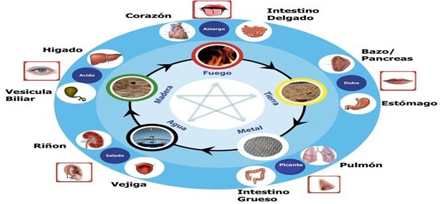 organos y elementos