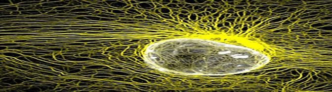filamentos-intermedios