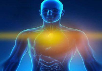 El chakra del timo, la gestión del avatar por el alma y la conexión cerebro-corazón