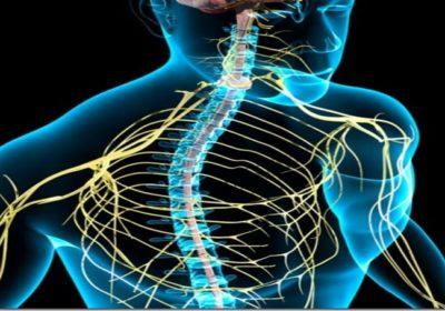 Sistema nervioso, meridianos, límites en el ADN y el potencial energético que tiene el ser humano